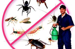 شركة مكافحة الحشرات بالهفوف